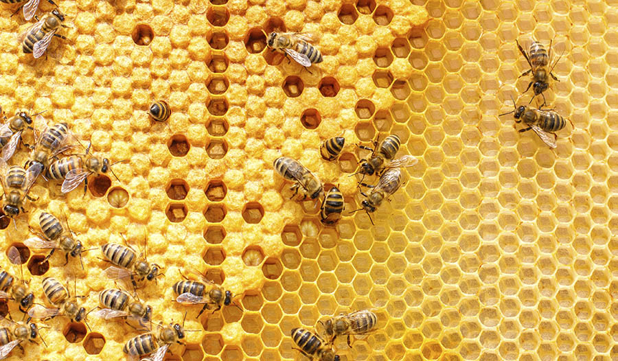 A Quick Guide to Propolis